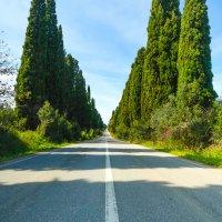 Bolgheri famous cypresses tree boulevard landscape. Tuscany landmark, Italy